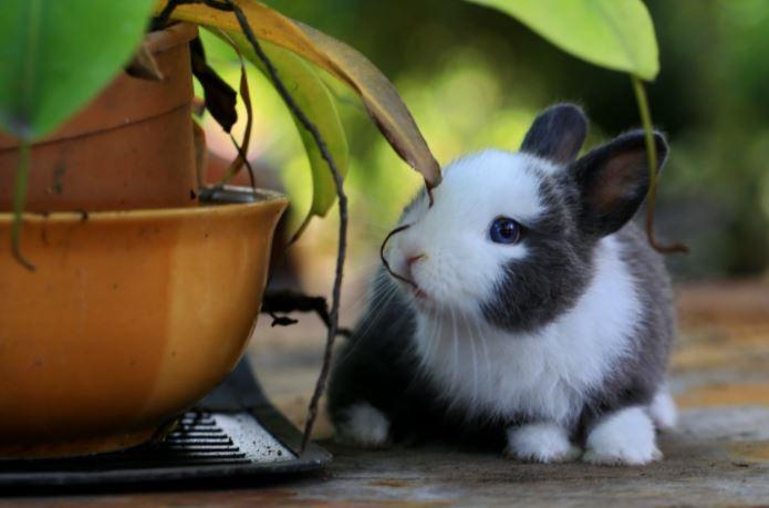 assicurazione online animali domestici