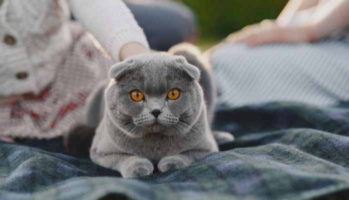 assicurazione per gatti