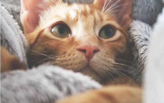 assicurazione sanitaria gatto